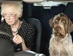 Женщина и собака за рулем